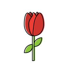 tulip flower stem leaves natural floral vector image