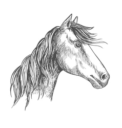 Horse with mane Mustang stallion sketch portrait vector image vector image