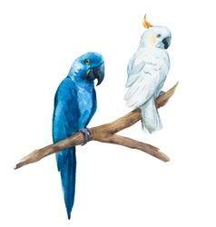 Watercolor parrot vector image vector image