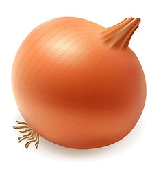 onion 001 vector image