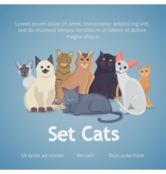 Collection of Cats of Different Breeds Set cats vector image