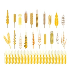 Ears of wheat and cereals symbols vector image