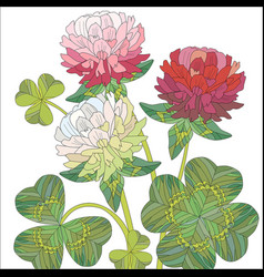 flowers of red and white clover with leaves vector image