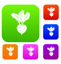 fresh beetroot set collection vector image