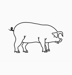 pig sketch hand drawn pig isolated on white vector image