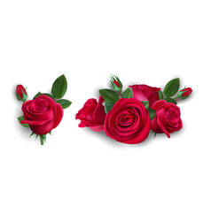 realistic bouquet roses isolated red rose vector image