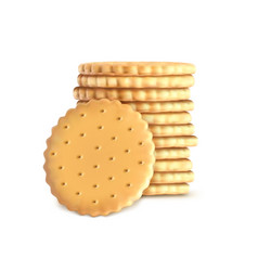 stack of round biscuit cookies template vector image