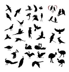 the big set wild birds silhouettes vector image