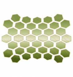 turtle shell vector image