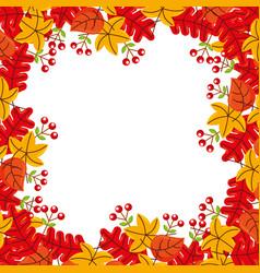autumn leaf maple foliage flora decoration vector image