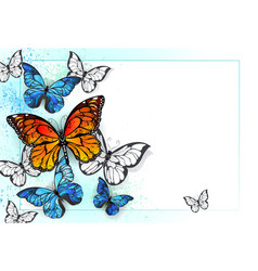 background with monarchs and morpho vector image vector image