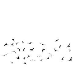 Birds gulls black silhouette on white background vector