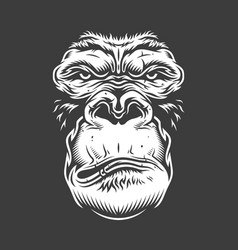Face of gorilla isolated on white vector