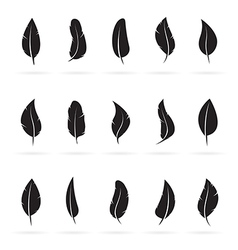 group feather vector image