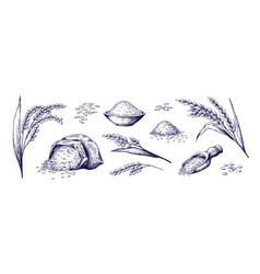 Hand drawn rice organic cereal in bag and rice vector
