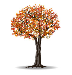 Red autumn tree vector