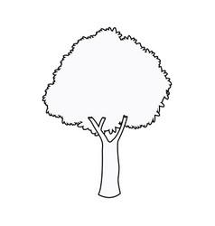 oak tree plant nature garden outline vector image vector image
