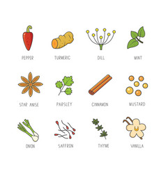 Set of culinary spices and herb for your vector