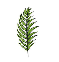 Tropical branch leaves plant vector