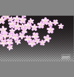 pink sakura flowers cherry transparent background vector image