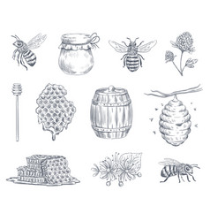 Bee engraving honey bees beekeeping farm and vector