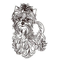 Dog breed yorkshire terrier vector