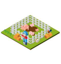 farmer and pigs in 3d design vector image