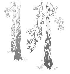 Hand drawn birches vector
