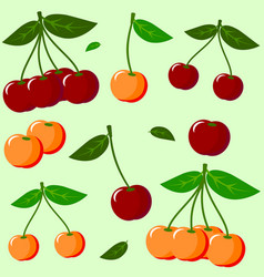 ripe cherries vector image