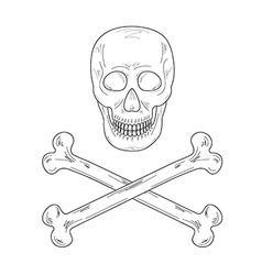 sketch of the skull and bones vector image
