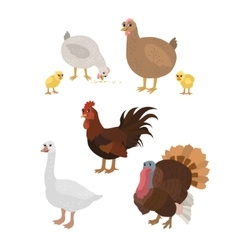 Cartoon set chicken cock chickens goose turkey vector image