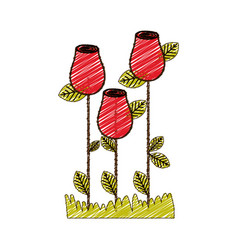 Color pencil drawing of rosebuds planted with vector