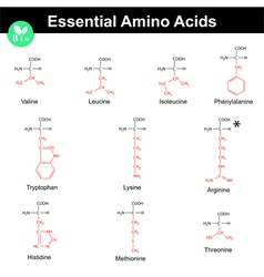 Essential amino acids vector