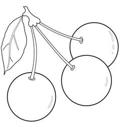 Outlines three cherries vector