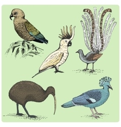 Set of australian birds engraved hand drawn vector