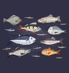set of different colored ocean fish wildlife vector image