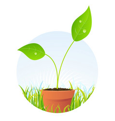 Spring plant seed in pot vector