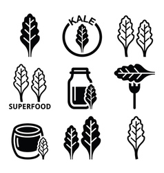 Superfood - kale leaves icons set vector