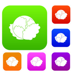 Cabbage set collection vector