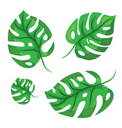 Cartoon tropical monstera leaves vector