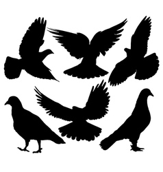 Pigeon Silhouette vector image