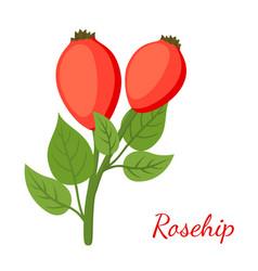 Rosehip herbal plant cartoon flat style vector