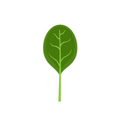 Spinach leave with shadow icon flat style vector