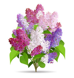 Spring flowers bouquet lilac vector