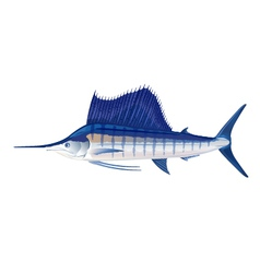 Sailfish vector image