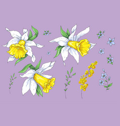 set different flowers narcissus hand drawn vector image