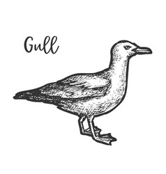 Sketch european herring gull hand drawn gull vector