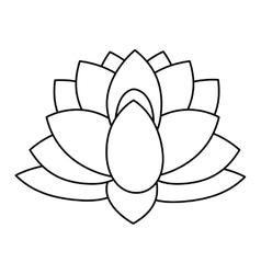 indian lotus flower vector image