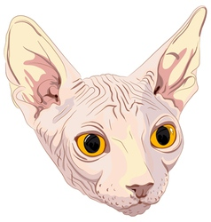 cat breed sphynx vector image vector image
