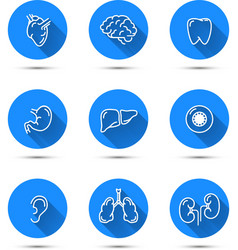 White outline icons of humans organs on blue vector image